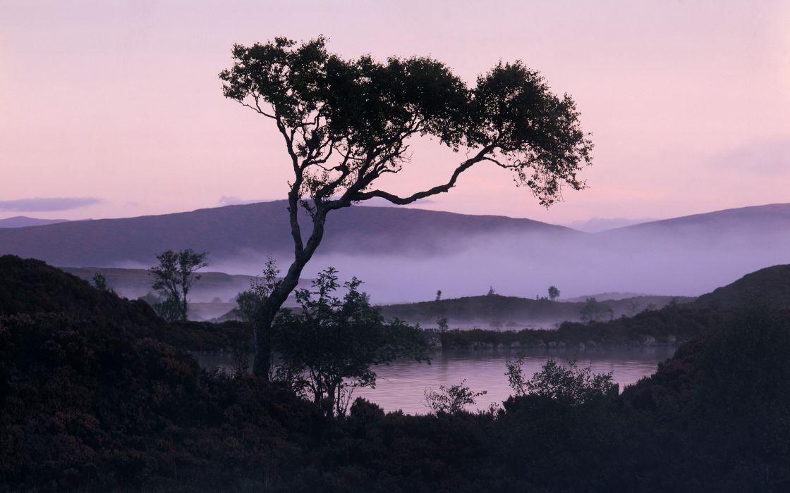 nature trees fog wallpaper