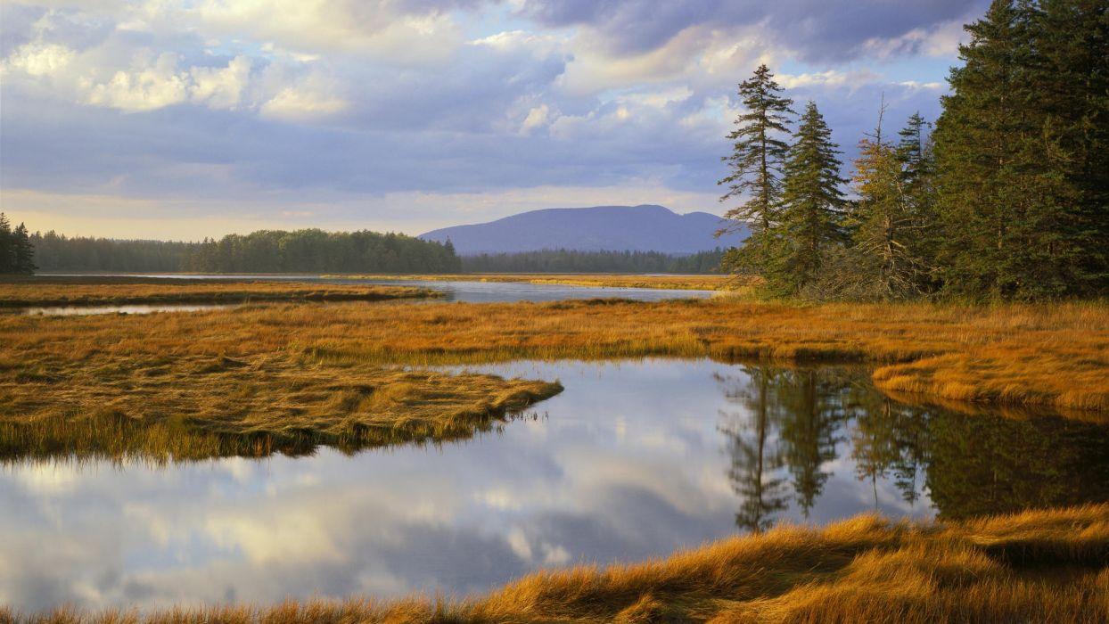 landscapes trees Maine bass Harbor National Park marsh wallpaper
