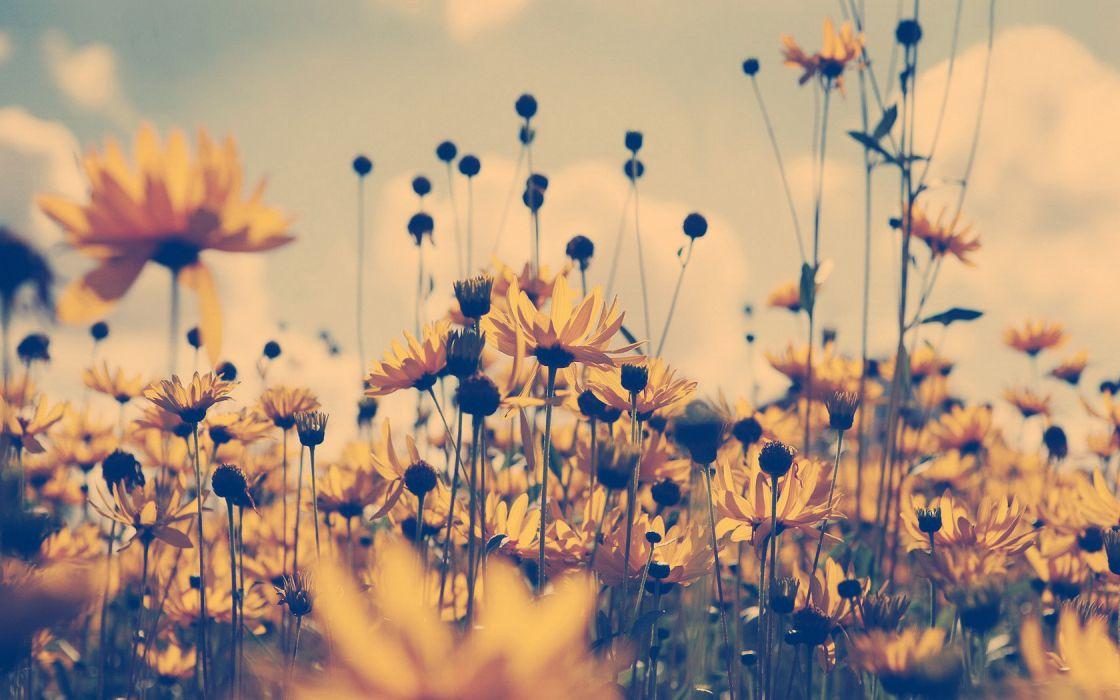 light flowers summer yellow flowers wallpaper