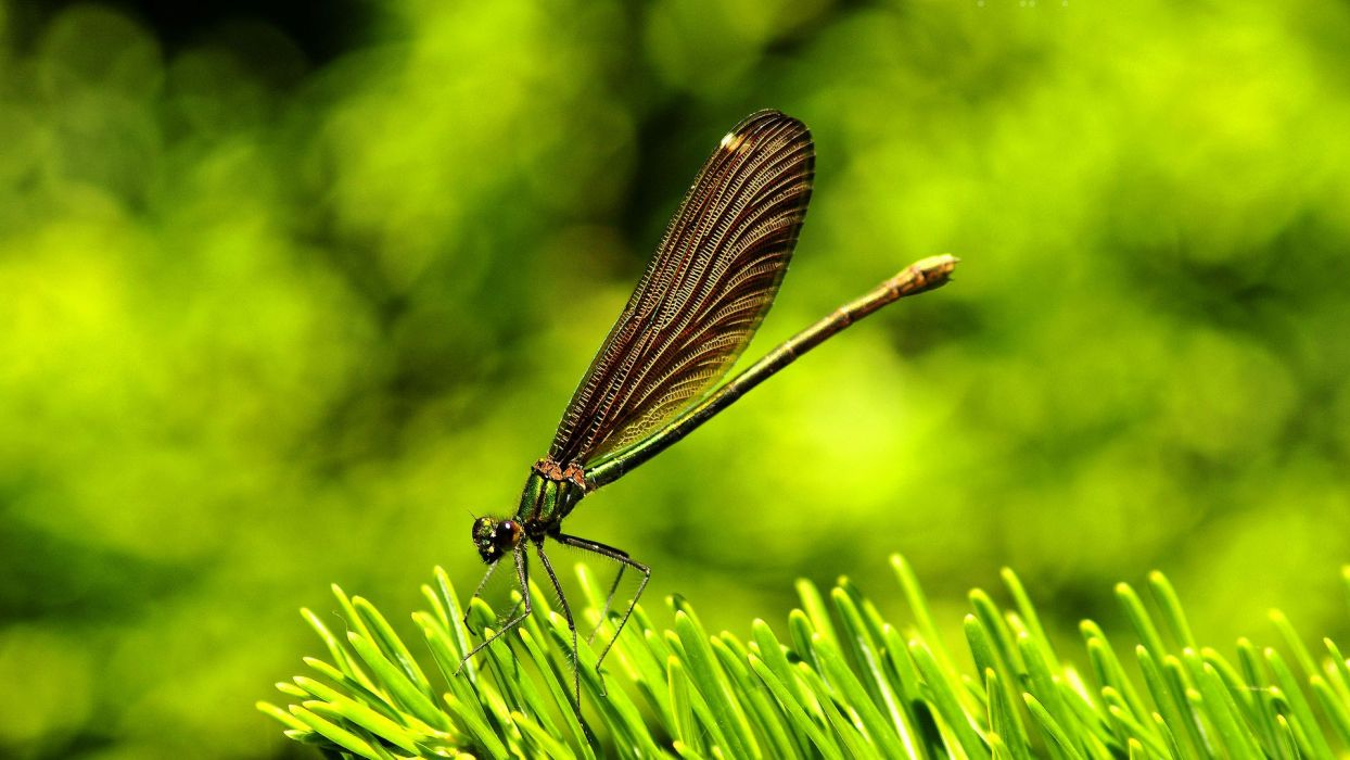 green nature insects dragonflies wallpaper