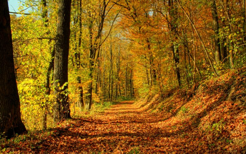 nature trees autumn forests paths wallpaper