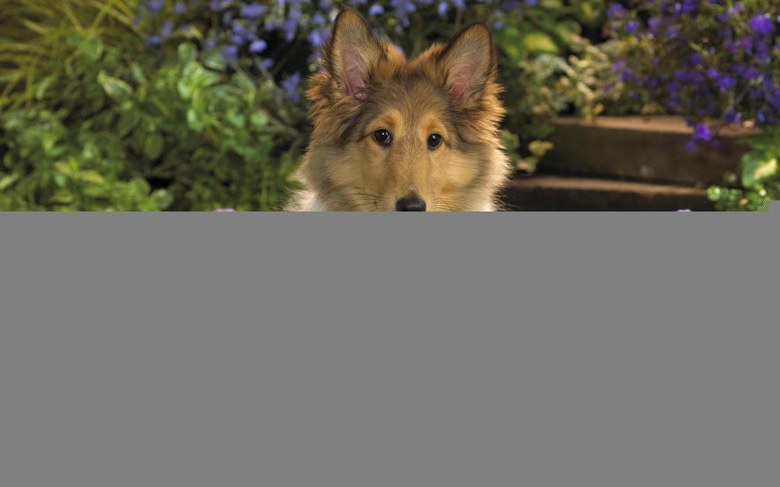 garden dogs wallpaper
