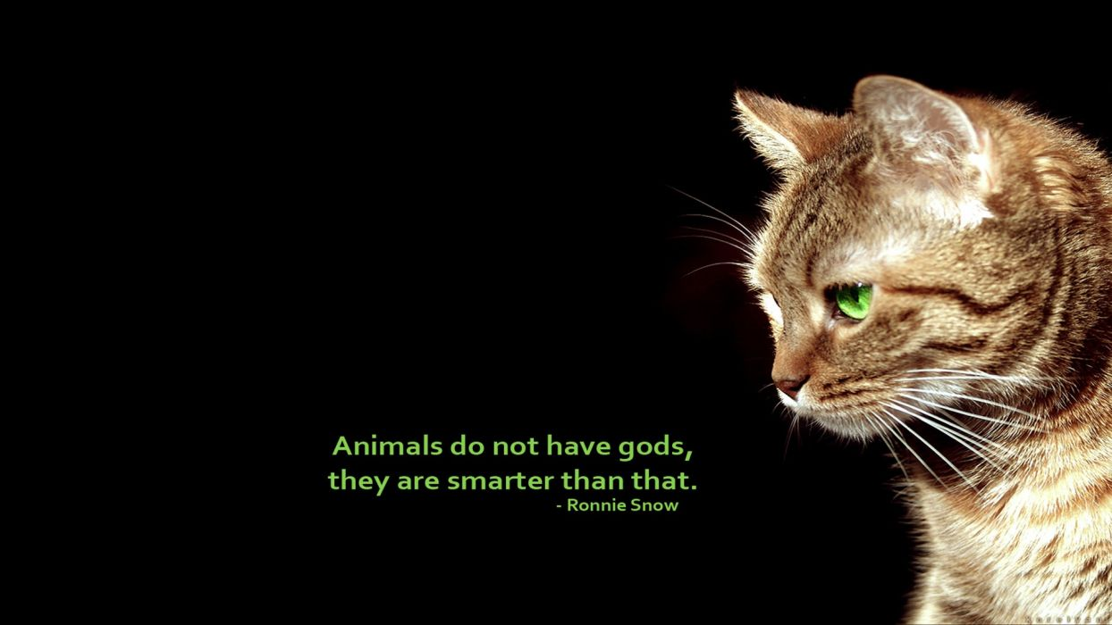 Animals Quotes Text Cats Animals Quotes Simple Background Black Background