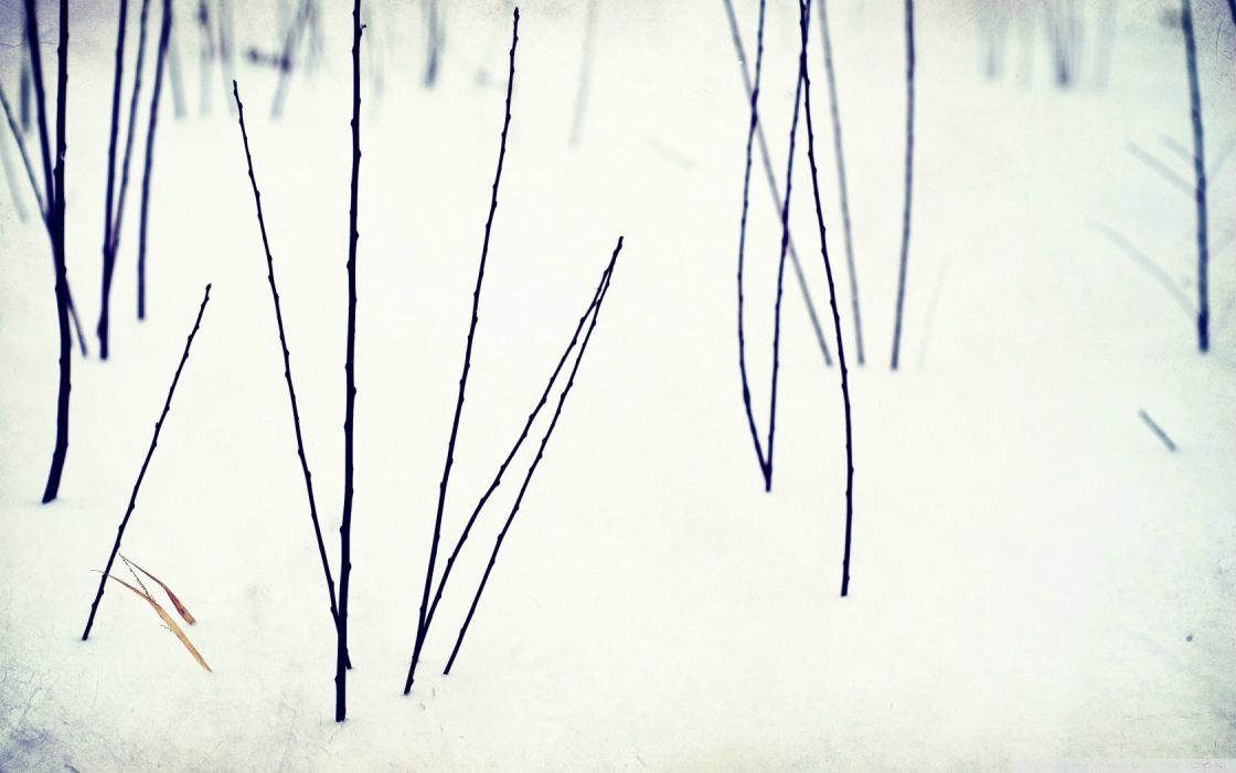 nature winter snow white macro twig wallpaper