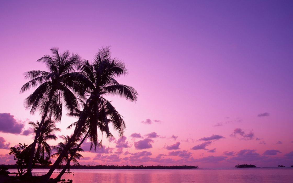 palm trees beaches wallpaper