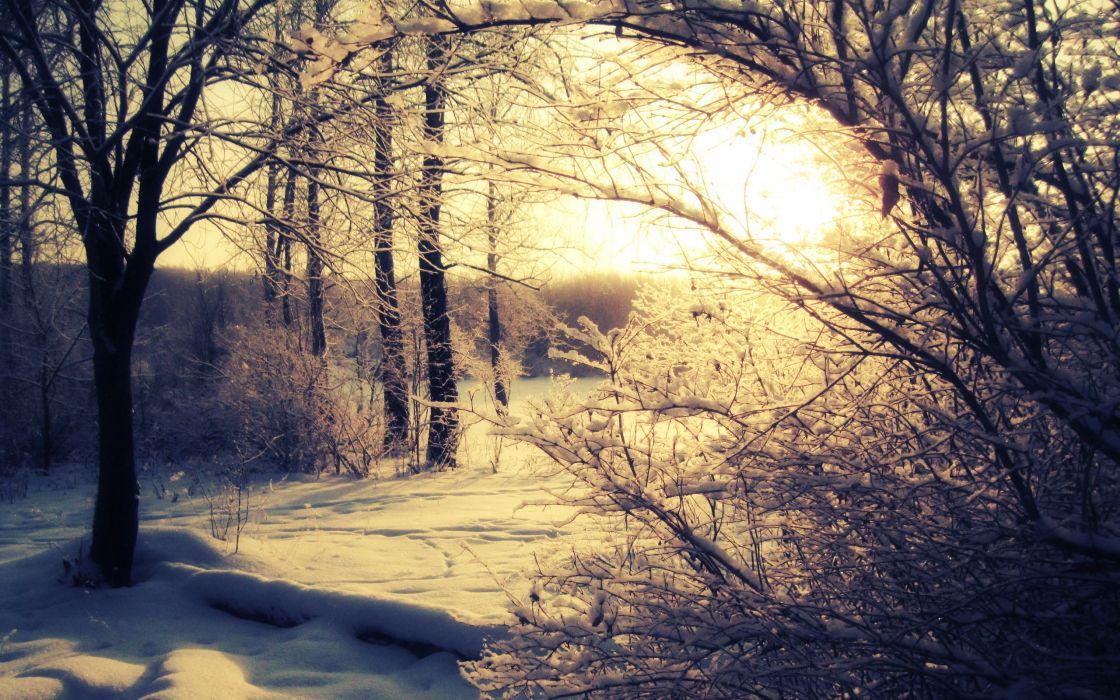 snow Sun trees shadows snow landscapes wallpaper