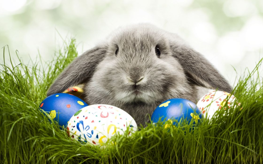 animals grass rabbits easter eggs wallpaper