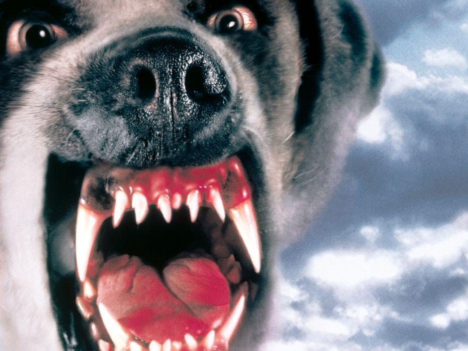 CUJO dark horror dog wallpaper