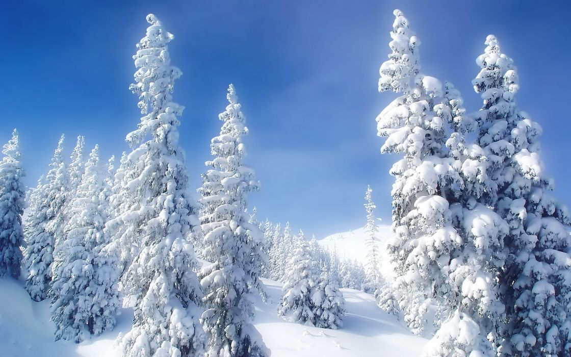 landscapes nature winter snow trees blue skies wallpaper