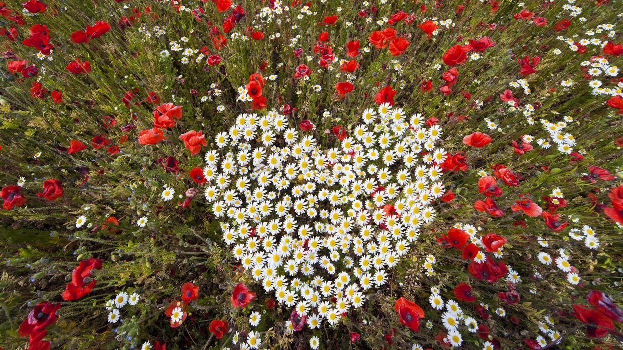 flowers hearts wallpaper