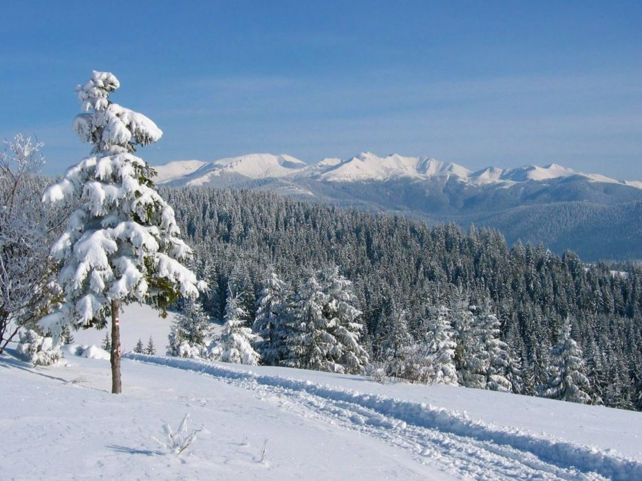 landscapes snow forests trail wallpaper