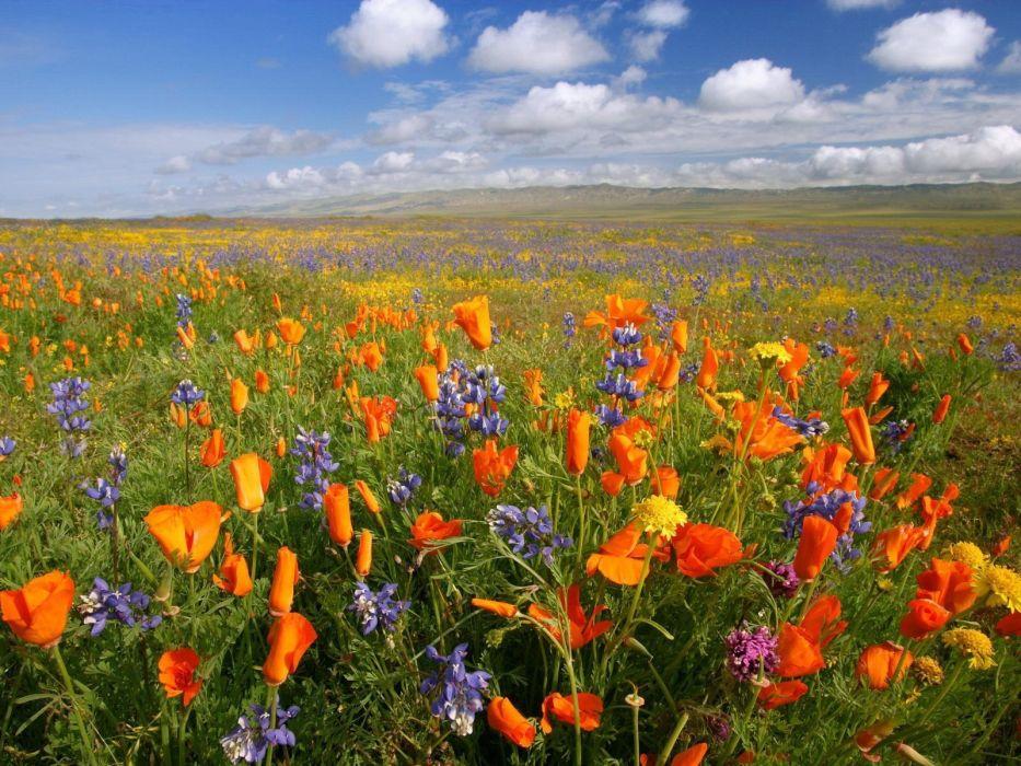 landscapes flowers wallpaper