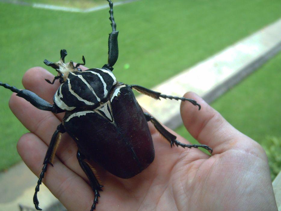 beetles wallpaper