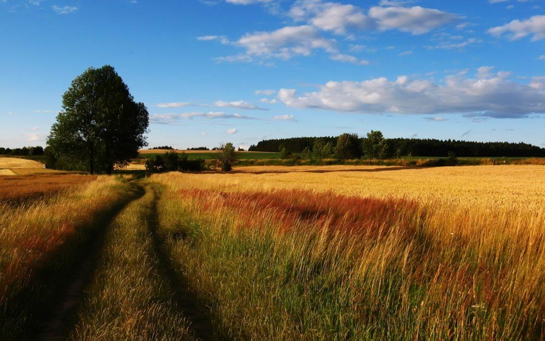 landscapes nature trees fields roads wallpaper