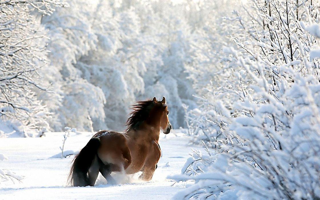 nature winter snow horses wallpaper
