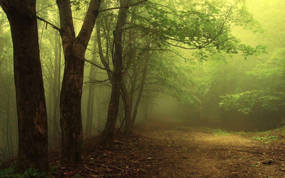 landscapes nature forests mist wallpaper