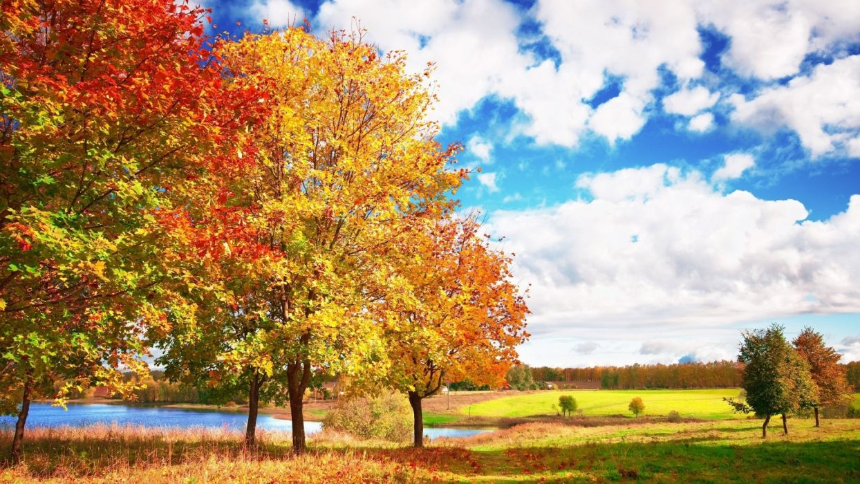 nature autumn wallpaper