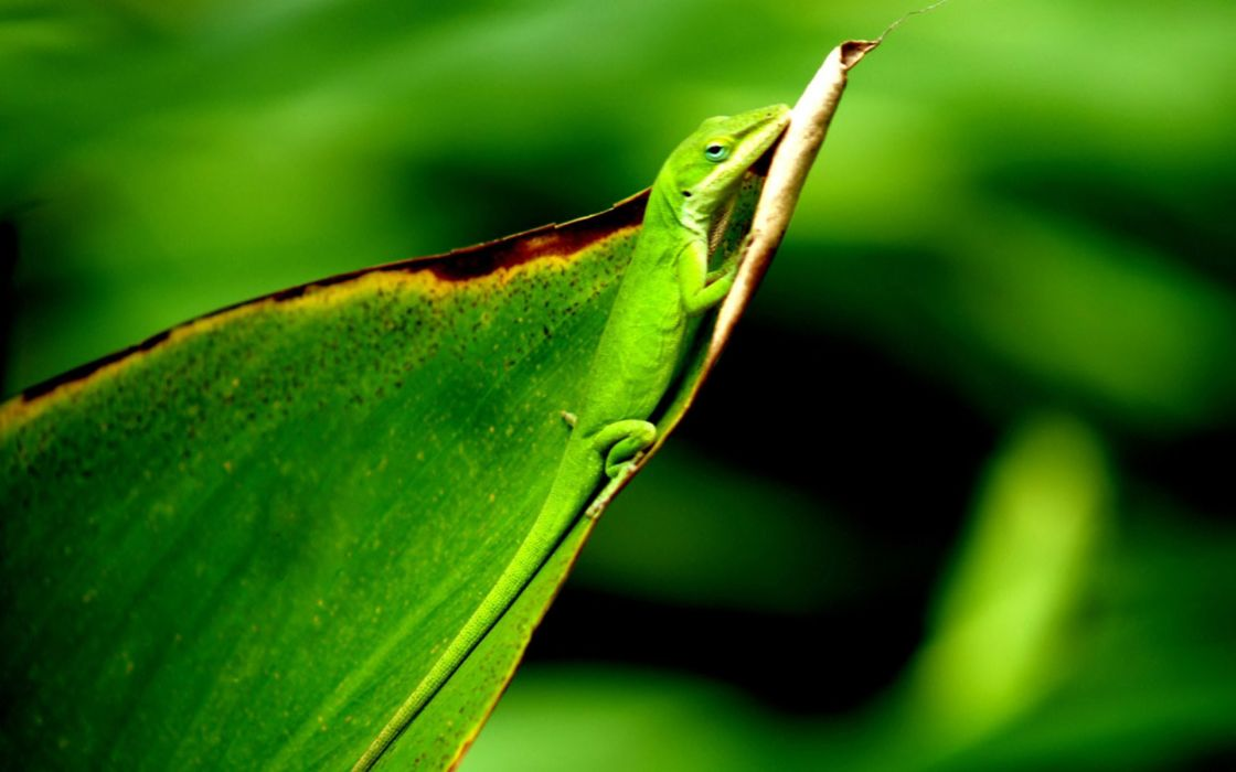 nature animal feed green national geographic grass hd wallpapers wallpaper