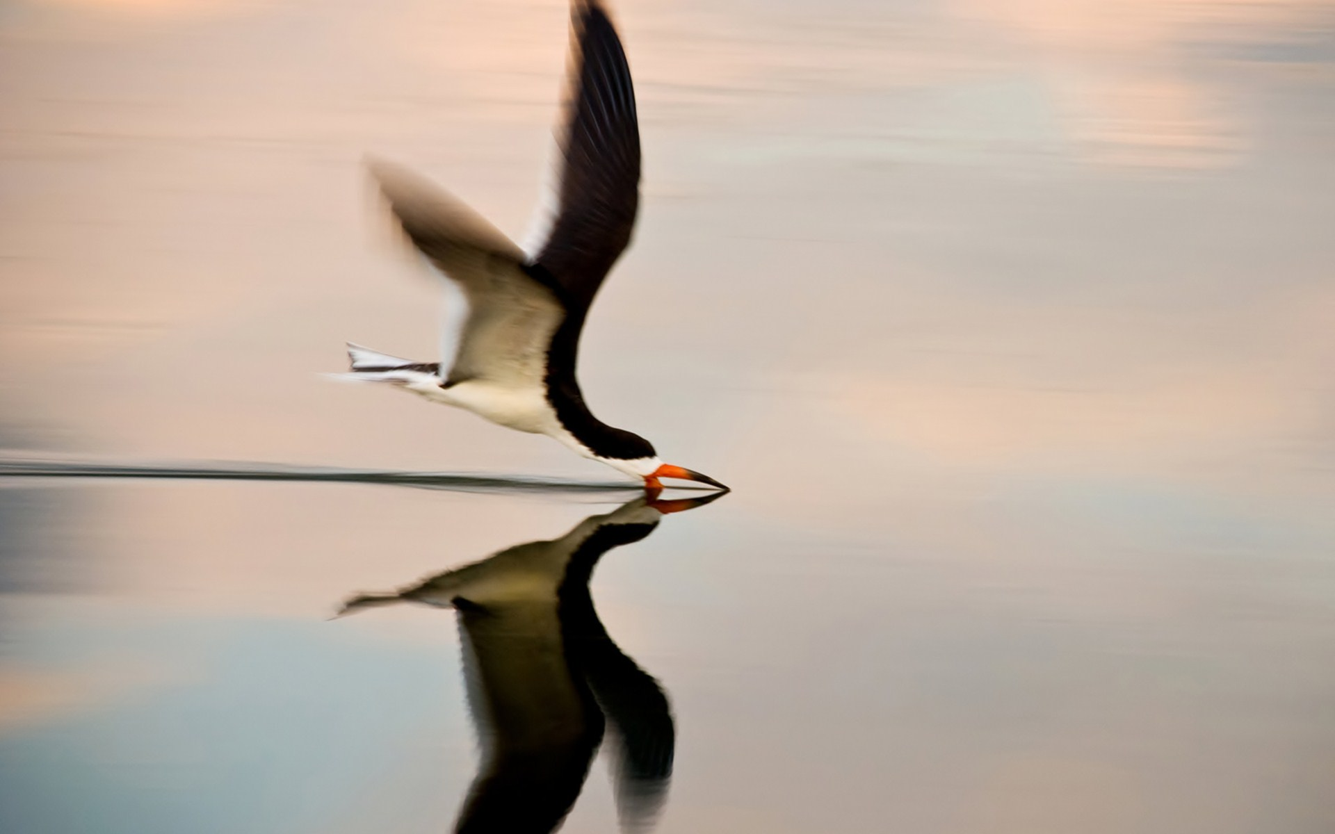 Nature Animal Bird Water Reflection National Geographic Green Hd