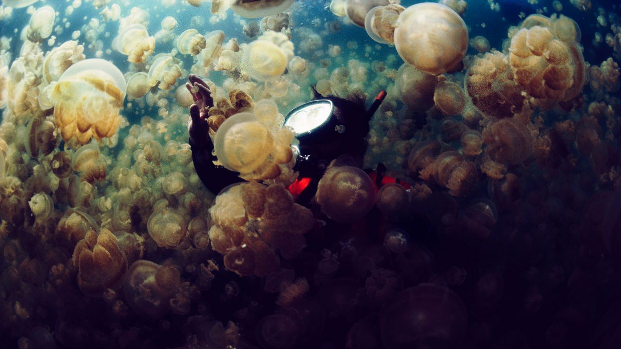 jellyfish underwater ocean sea bokeh jelly (9) wallpaper