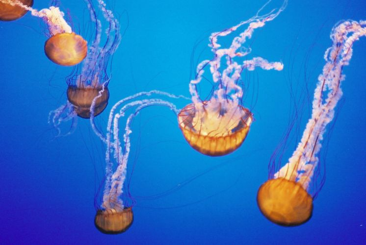 jellyfish underwater ocean sea bokeh jelly (26) wallpaper