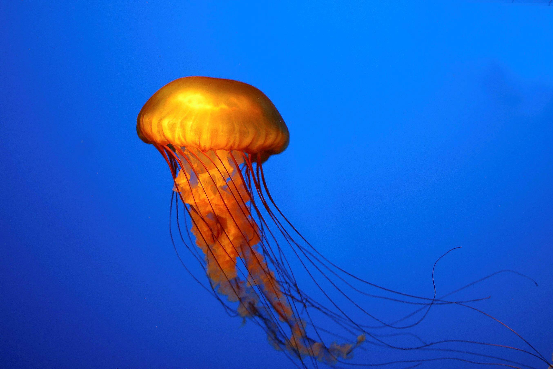 Jellyfish underwater ocean sea bokeh jelly 27 wallpaper for Too cool fishing