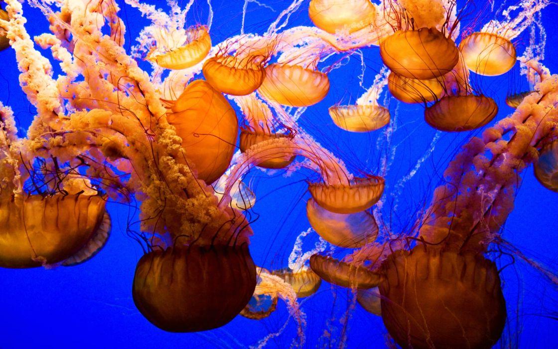 jellyfish underwater ocean sea bokeh jelly (44) wallpaper