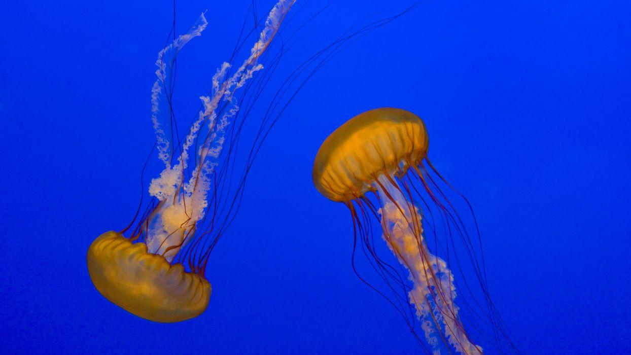 jellyfish underwater ocean sea bokeh jelly (52) wallpaper
