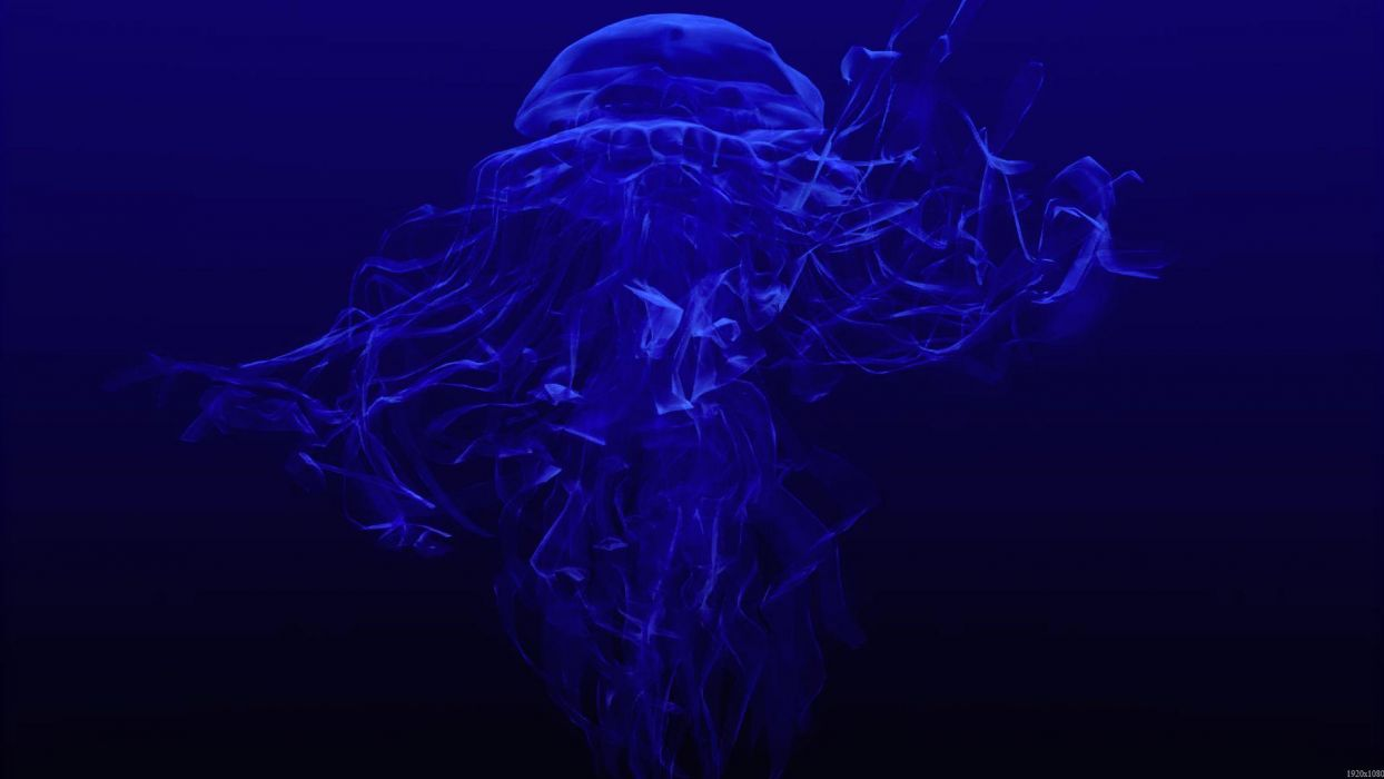 jellyfish underwater ocean sea bokeh jelly (53) wallpaper