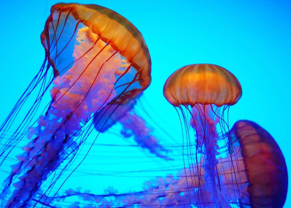 jellyfish underwater ocean sea bokeh jelly (56) wallpaper