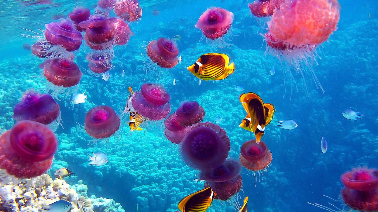 jellyfish underwater ocean sea bokeh jelly (66) wallpaper