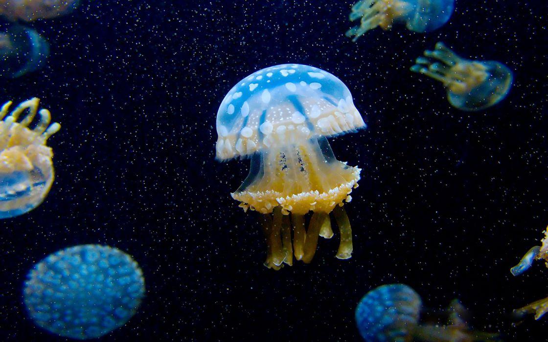 jellyfish underwater ocean sea bokeh jelly (75) wallpaper