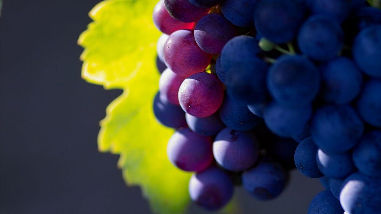 nature fruits grapes macro depth of field wallpaper