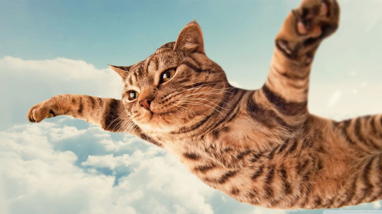 clouds cats animals fly skies wallpaper