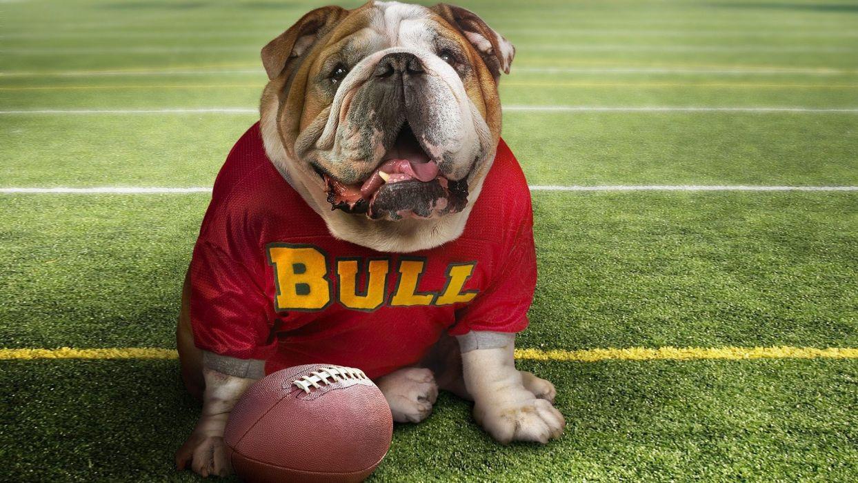 animals dogs bulldog wallpaper
