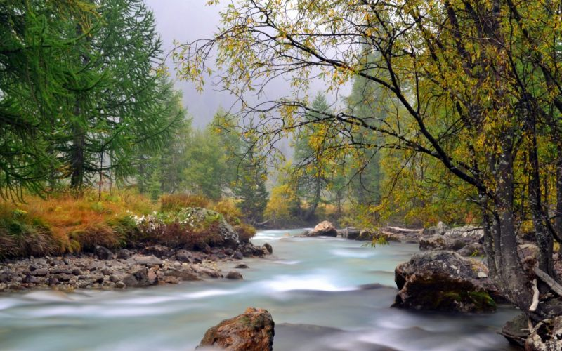 water landscapes nature trees outdoors wallpaper