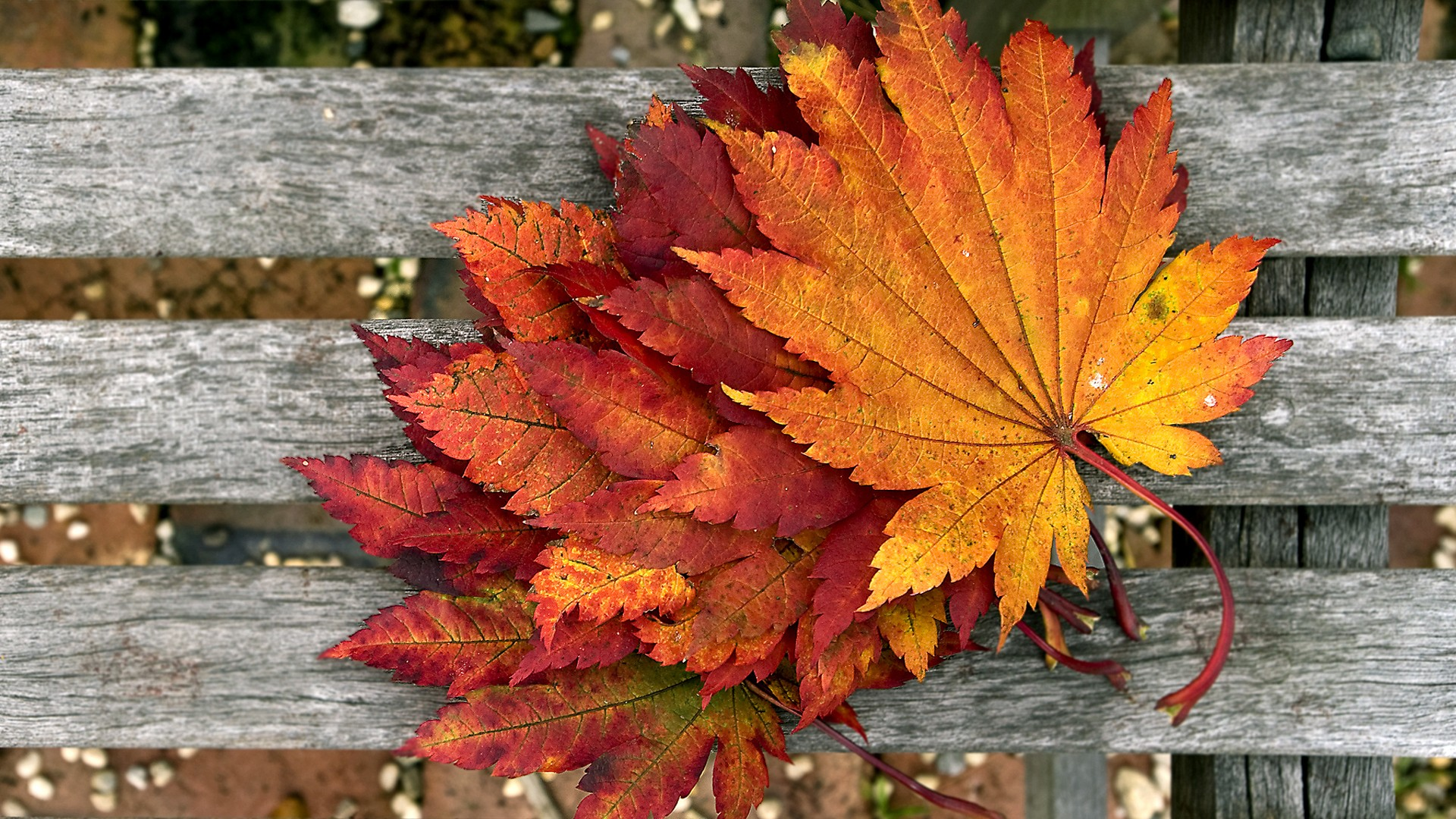 autumn leaves on bench - photo #17