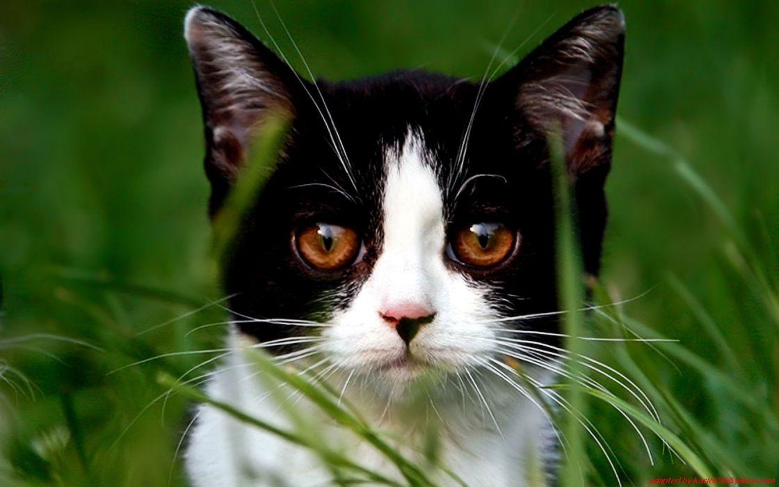 nature cats animals grass wallpaper