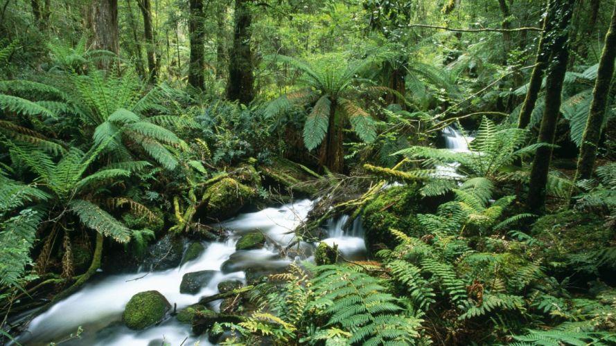 landscapes forests Australia ferns National Park wallpaper