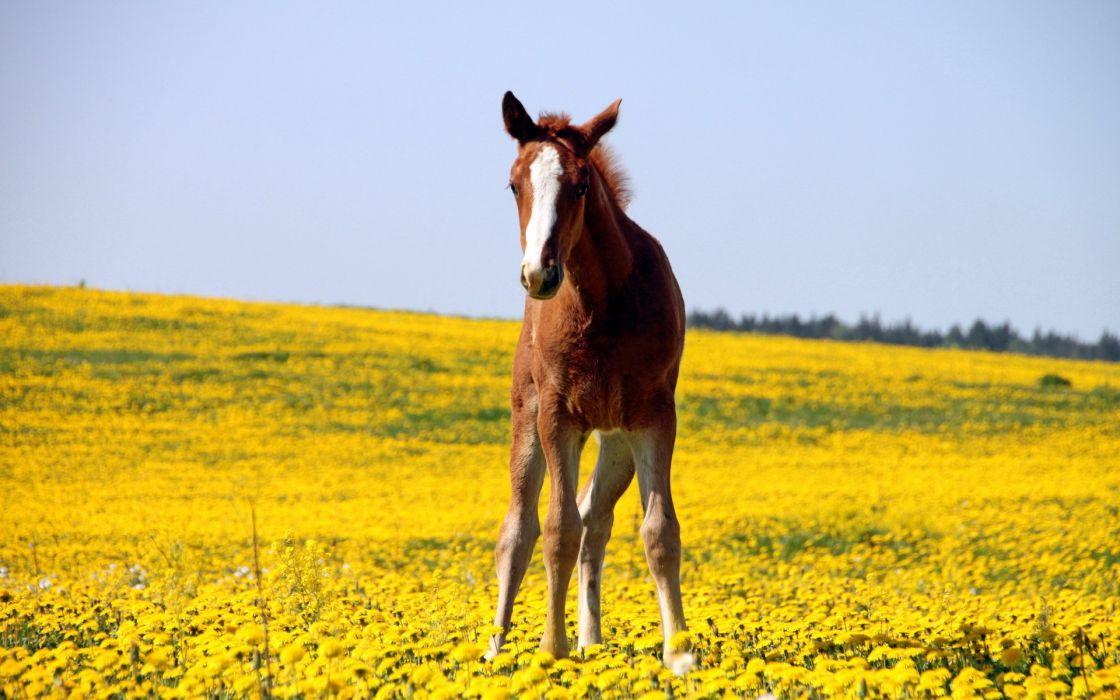 nature animals horses wallpaper