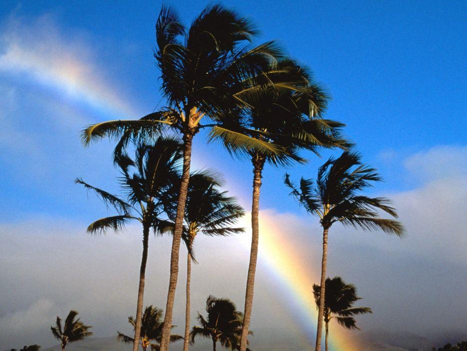 rainbows palm trees wallpaper