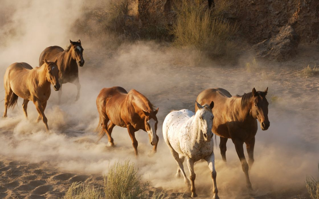animals dust horses wallpaper
