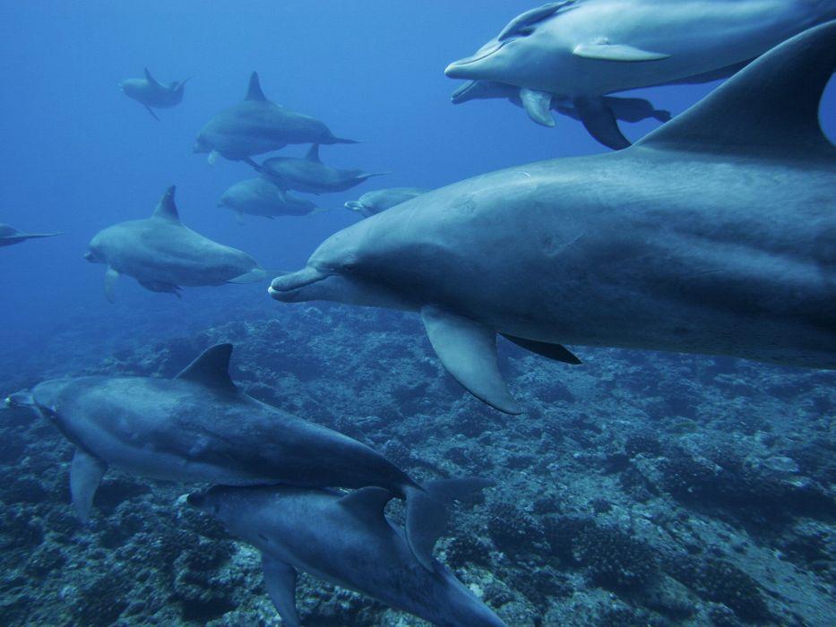 ocean monochrome dolphins underwater sea wallpaper