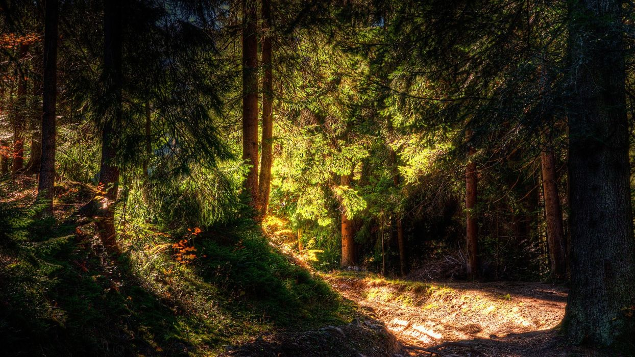 light nature trees forests shadows HDR photography wallpaper