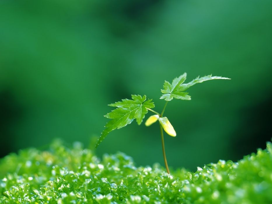 green nature plants wallpaper