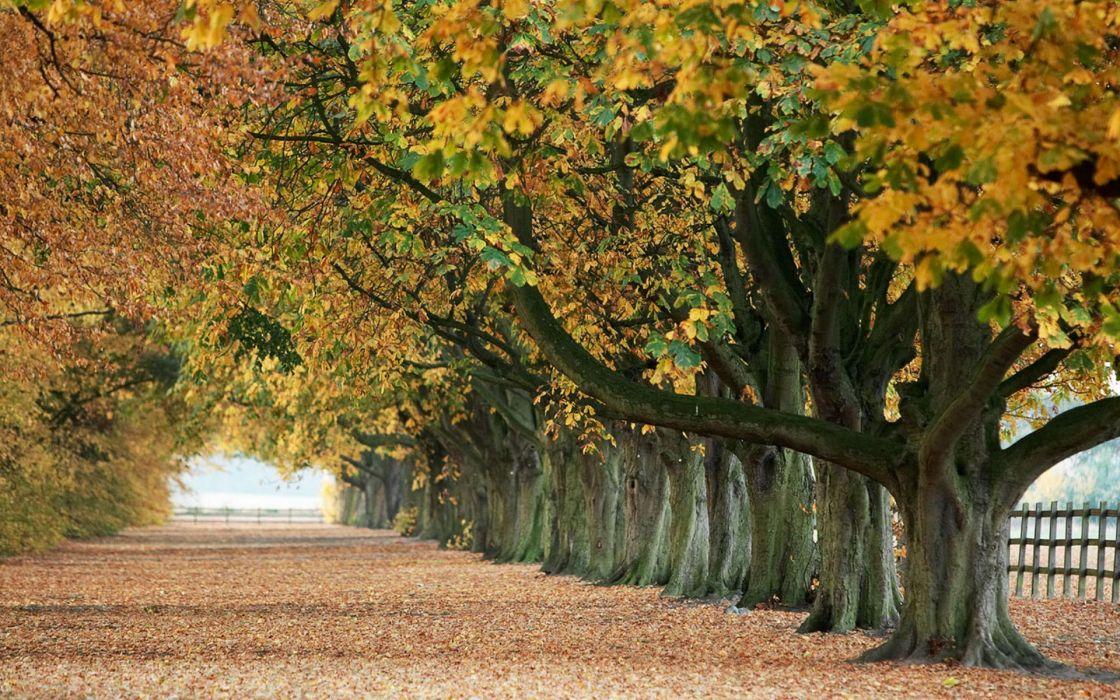 trees autumn leaves paths fallen leaves wallpaper