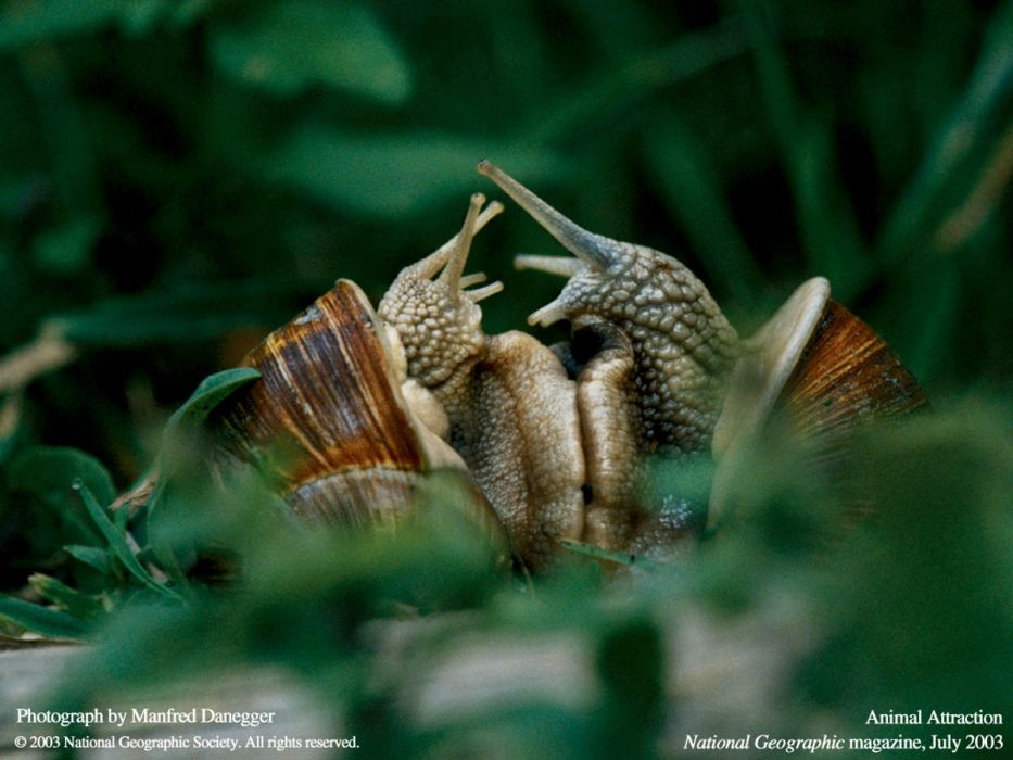 National Geographic snails wallpaper