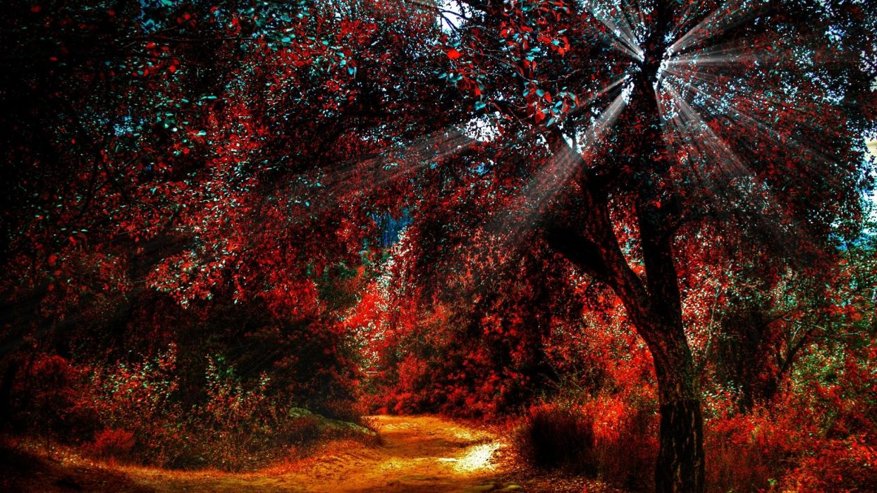 trees sunlight wallpaper