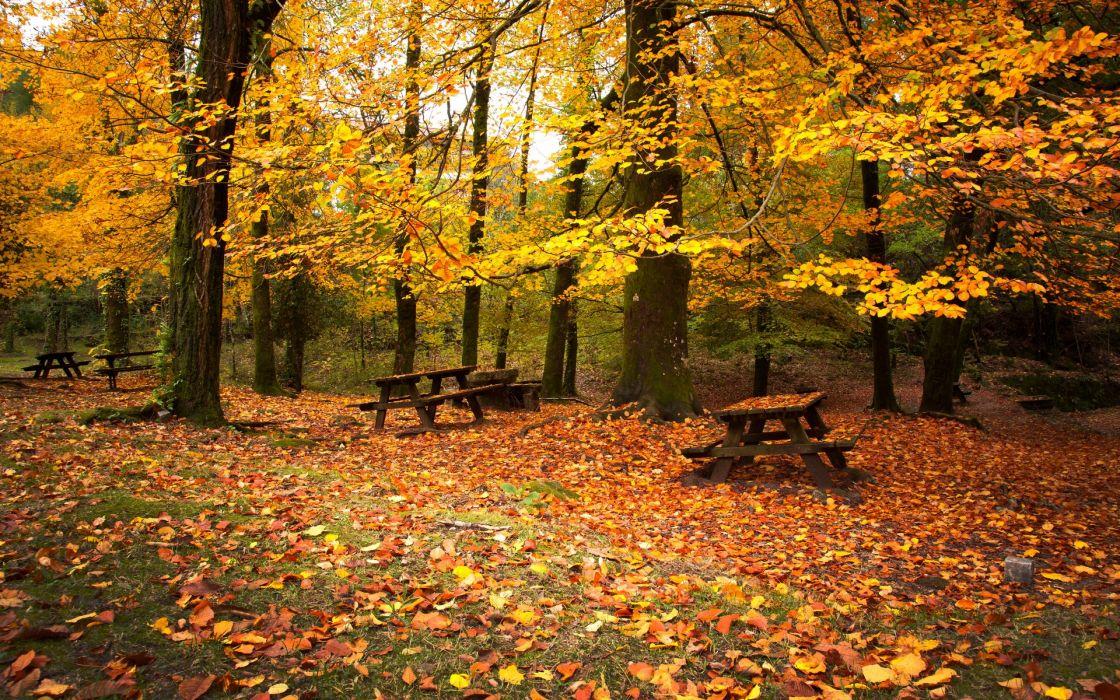 autumn leaves falling down wallpaper
