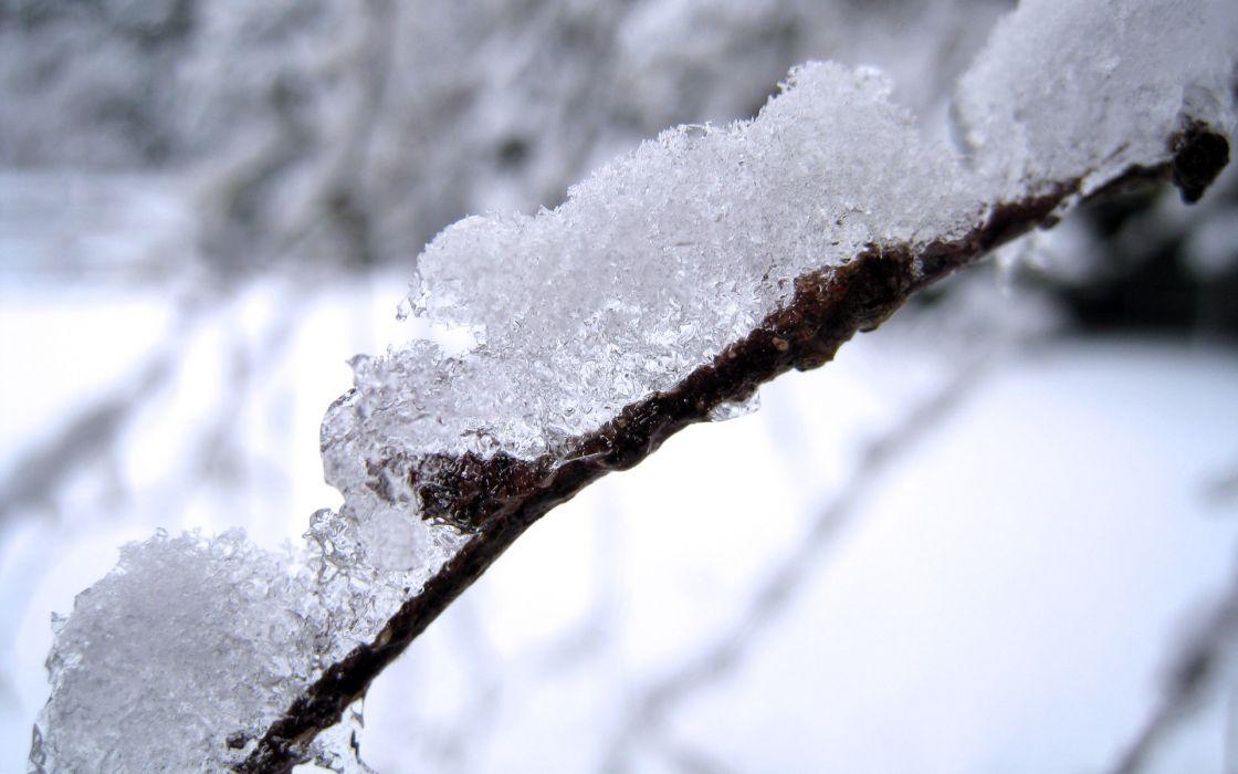 snow frost wallpaper